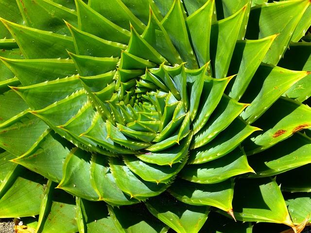 Jakie zioła na nadciśnienie?