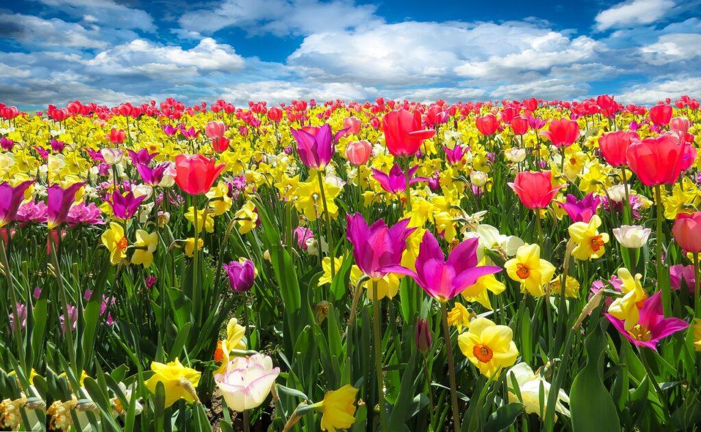 Wiosenne porządki: oczyszczanie organizmu po zimie