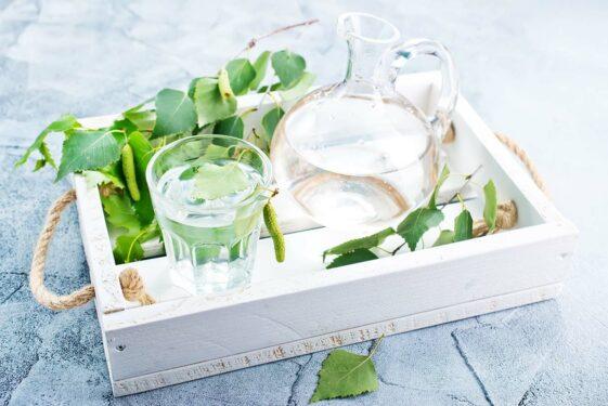 Woda brzozowa – właściwości lecznicze, stosowanie oraz sposób zdobycia. Kiedy warto stosować wodę brzozową?